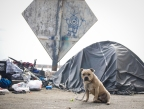 Friendly guard dog sits watch outside of its owner's tent along the LA River.