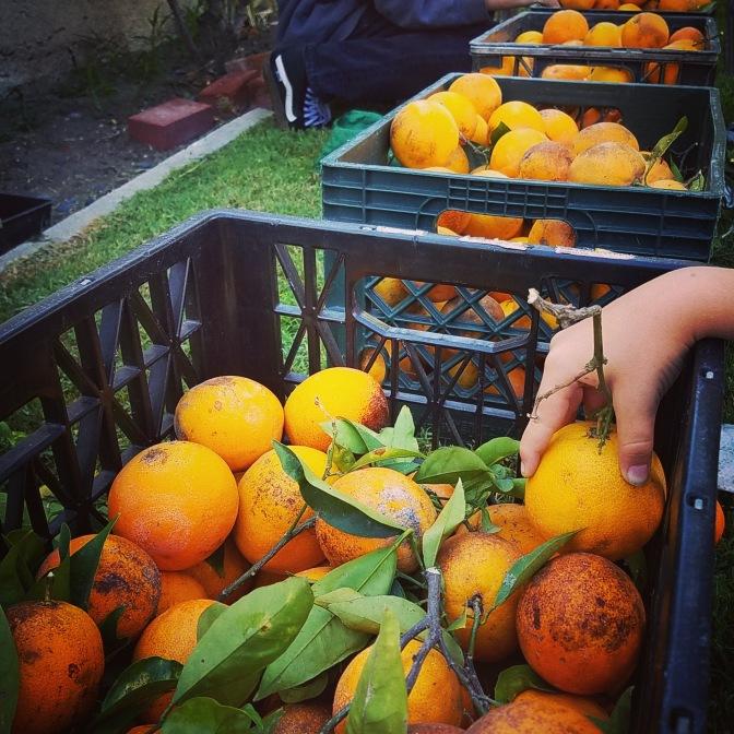 Harvest Partners LB